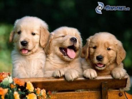 Obrazky.4ever.sk] pes, psiky, zviera, lavicka, kvety 4612631